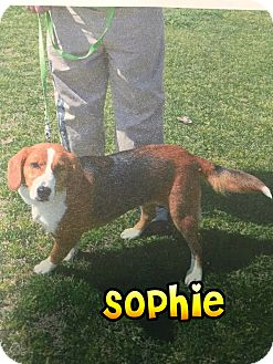 Beagle Mix Dog for adoption in Barnwell, South Carolina - Sophie