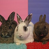 Other/Unknown Mix for adoption in Montclair, California - Farrah, Bosley & Vixen