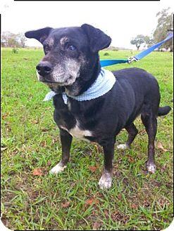 Labrador Retriever Mix Dog for adoption in Simsbury, Connecticut - Lauren