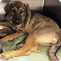 Adopt A Pet :: Ella - Murrieta, CA