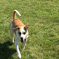 Adopt A Pet :: Ryley - East Randolph, VT