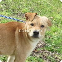Adopt A Pet :: Merlin - Rocky Mount, NC