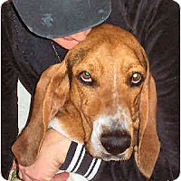 Adopt A Pet :: Smores - Phoenix, AZ