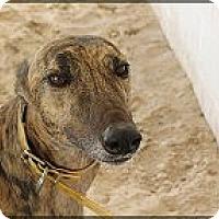 Adopt A Pet :: Mary - St Petersburg, FL