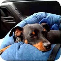 Adopt A Pet :: NACHO - Springvale, ME