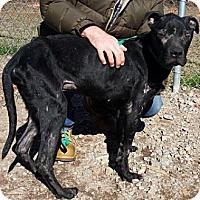 Adopt A Pet :: Peter - Athens, GA