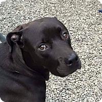 Adopt A Pet :: Jake - Cuddebackville, NY