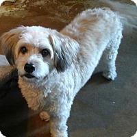 Adopt A Pet :: Shiloh (male) - Phoenix, AZ