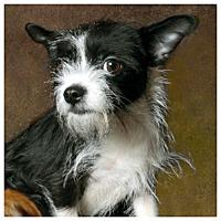 Adopt A Pet :: Bella - West LA, CA