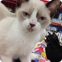 Adopt A Pet :: Baby Grumpy - Redondo Beach, CA