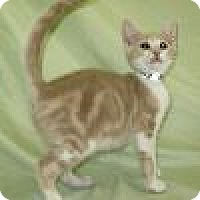 Adopt A Pet :: Gatsby - Powell, OH