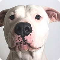 Adopt A Pet :: Sandy - Redding, CA