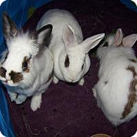 Adopt A Pet :: Albert & Ludwig - Alexandria, VA