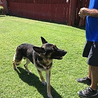 Adopt A Pet :: Hudson - San Diego, CA