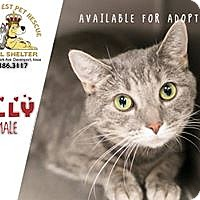Adopt A Pet :: Lilly - Davenport, IA