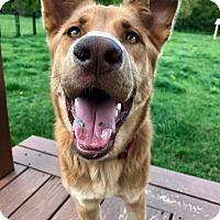 Adopt A Pet :: Cupcake - New Canaan, CT