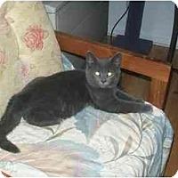 Adopt A Pet :: Graylon - Portland, ME