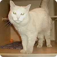Adopt A Pet :: Isabella - Chesapeake, VA