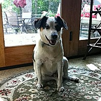 Adopt A Pet :: BANJO - Minnetonka, MN