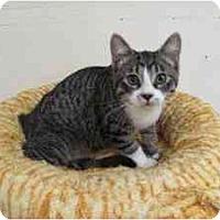 Adopt A Pet :: Jake - Milwaukee, WI