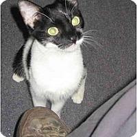 Adopt A Pet :: Matilda - New York, NY
