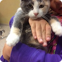 Adopt A Pet :: Cassie - Byron Center, MI