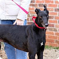 Adopt A Pet :: Willard - Oklahoma City, OK