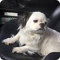 Adopt A Pet :: Joy - Hazard, KY