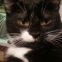 Adopt A Pet :: Luka - Salem, OR