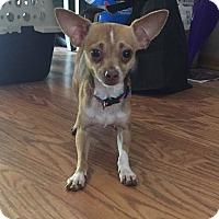 Adopt A Pet :: Liam - Indianapolis, IN
