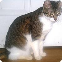 Adopt A Pet :: Bailey - Summerville, SC