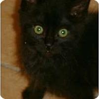 Adopt A Pet :: Auggie - lake elsinore, CA