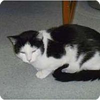 Adopt A Pet :: Tuxedo - Hamburg, NY