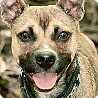 Adopt A Pet :: Wile E. Coyote (Wiley) - Hastings, NY