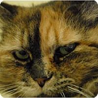Adopt A Pet :: Freesia - Lunenburg, MA