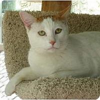 Adopt A Pet :: Fizzle - Chesapeake, VA