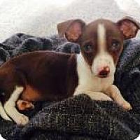 Adopt A Pet :: Jax - Marlton, NJ