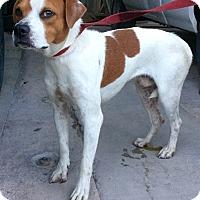 Adopt A Pet :: Hutch - Phoenix, AZ