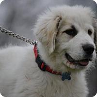 Adopt A Pet :: Duke - Whitewright, TX