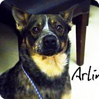 Adopt A Pet :: Arlin - Defiance, OH