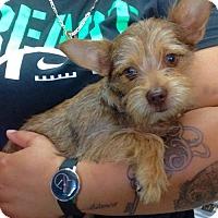 Adopt A Pet :: ! Stella - Colton, CA
