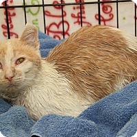 Adopt A Pet :: Otis (FeLV Positive) - Marietta, OH