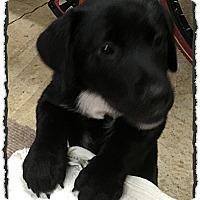 Adopt A Pet :: Grizzly - Bastrop, TX