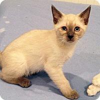 Adopt A Pet :: Bonnie - Irvine, CA