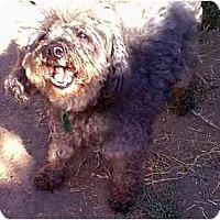 Adopt A Pet :: Whitney - dewey, AZ