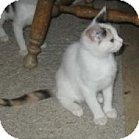 Adopt A Pet :: K-Sissy4-Minerva - Colorado Springs, CO