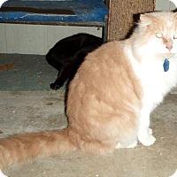 Adopt A Pet :: BC Tyson - Columbus, OH