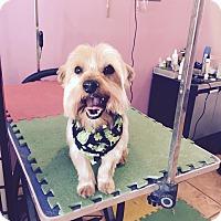Adopt A Pet :: BROOKLYN - Mahopac, NY