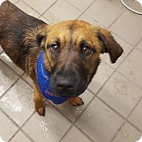 Adopt A Pet :: Mya - Toledo, OH