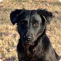 Adopt A Pet :: Molly - Westport, CT